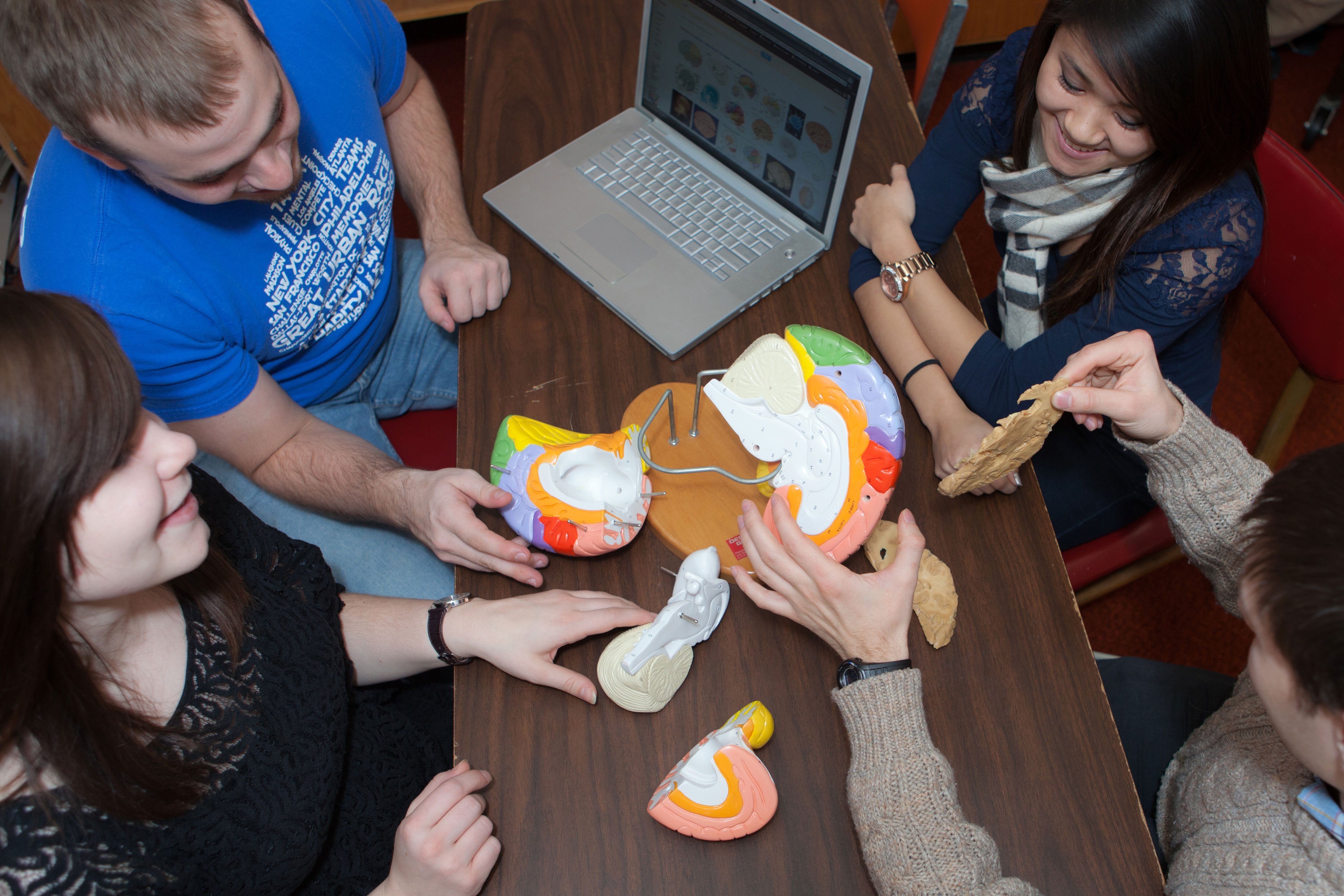 CSD students studying a model of the human brain.