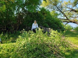 Vedrana Stanarevic removes brush and invasive species from the Willow Creek Woods near Goodnight Hall.