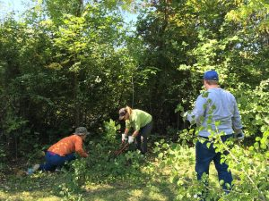 Faculty, staff and students remove brush and invasive species from the Willow Creek Woods near Goodnight Hall.
